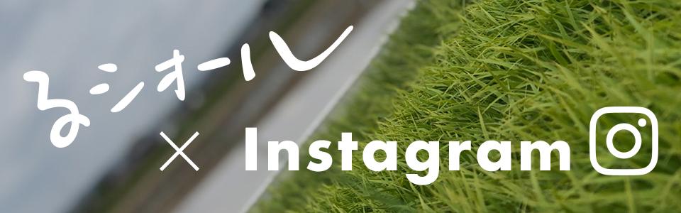 るシオール × instagram